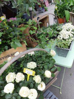 Florist display.